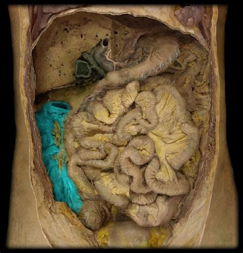 Digestive System at Grand Rapids Community College - StudyBlue