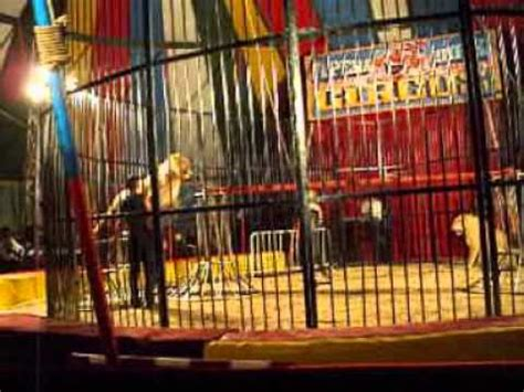 Lions and tigers in Circus Arena - YouTube