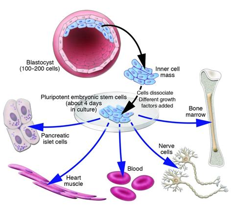 JCI - Stem cells: science, policy, and ethics