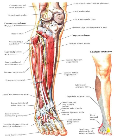 Top 190 ideas about Rehab on Pinterest   Si joint, Knee