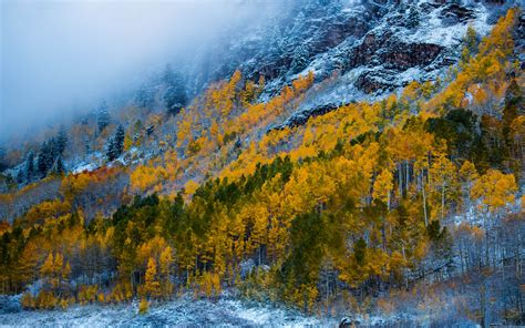 Mountains With Snow Birch Forest With Yellow Leaves And