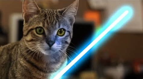 Kitten Uses The Force [STAR WARS VIDEO] - CatTime